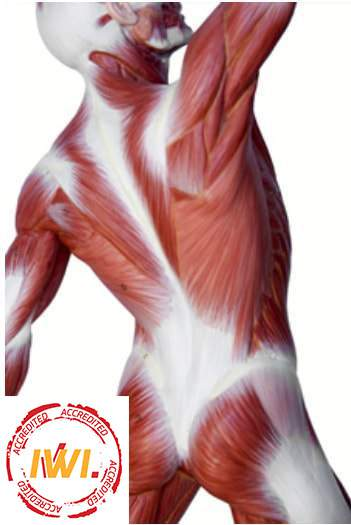 Fascia Stretching  - IWI ACCREDITED Workshop / 2020 Február 9.